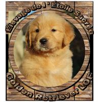 Logo élevage de Golden Retriever LOF de l'étoile sacrée